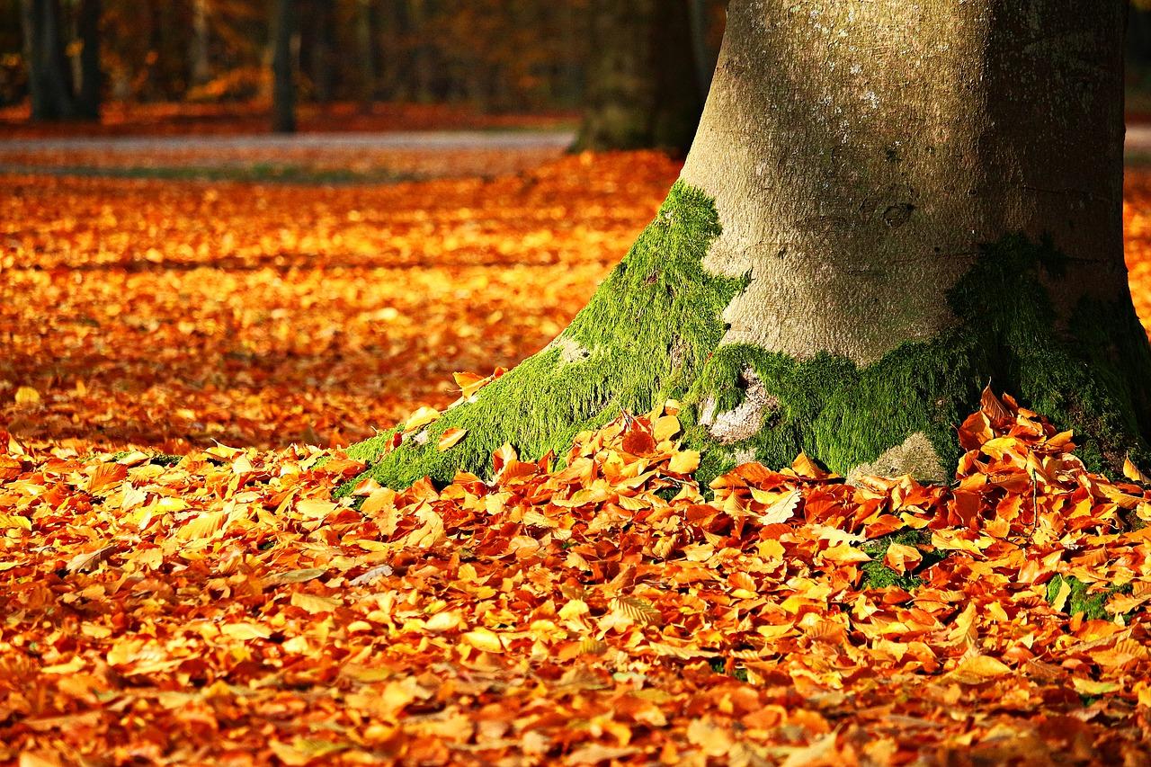 De ce frunzele copacilor isi schimba culoarea toamna