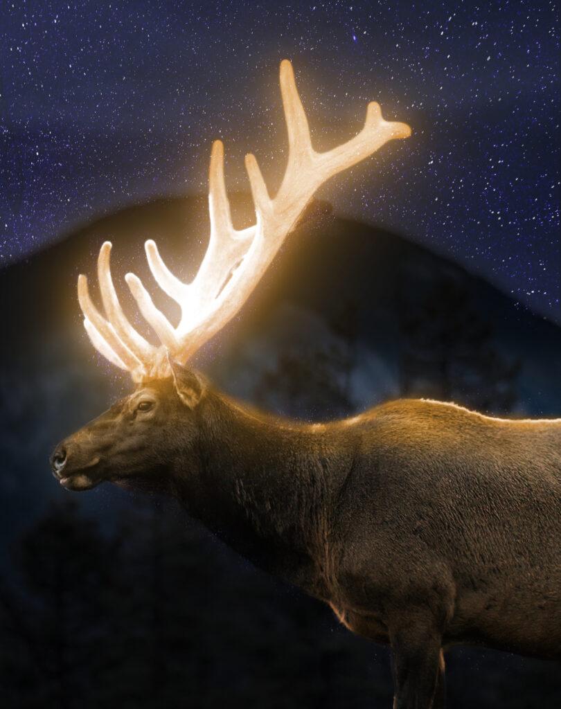 Această imagine are atributul alt gol; numele fișierului este Deer-Glow-Edit-4-810x1024.jpg